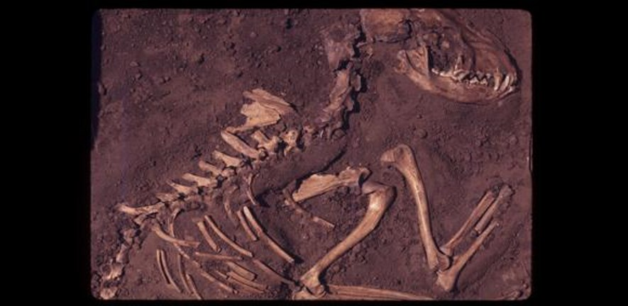 Del Baston (courtesy of the Center for American Archeology)