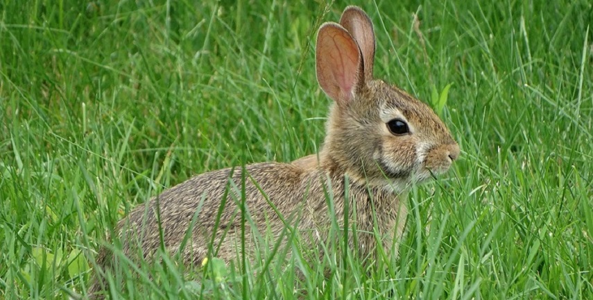 rabbit-2163146_960_720 Pixabay Hooker472