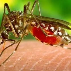 Deadly Rift Valley fever: new insight, and hope for the future